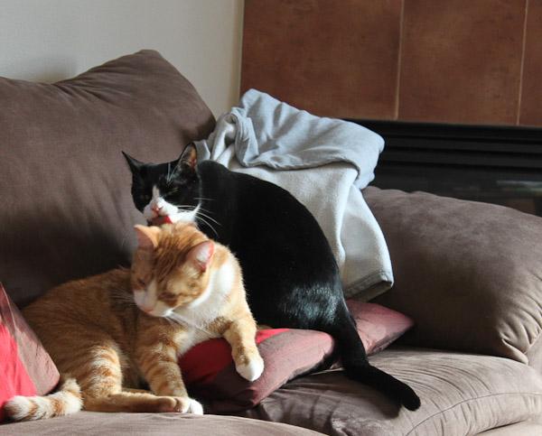 2010_1229_003_kittens-1