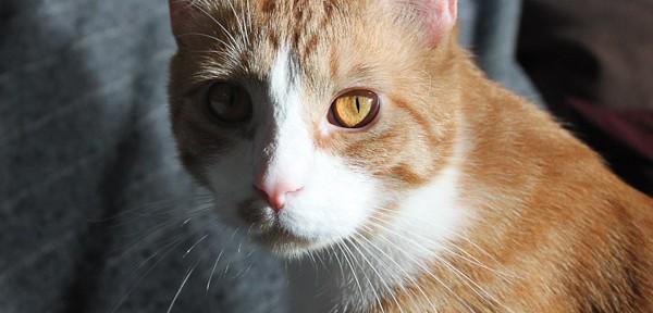 2010_1229_004_kittens-1
