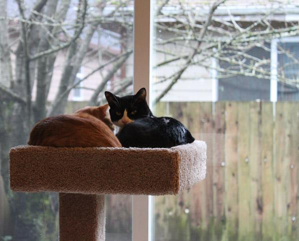 2010_1229_005_kittens-1
