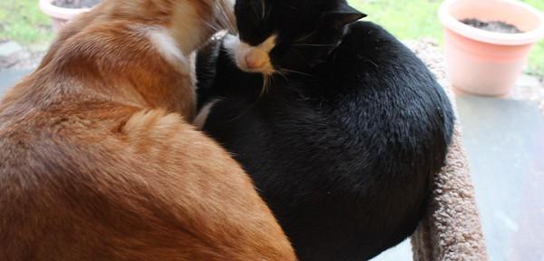 2010_1229_013_kittens