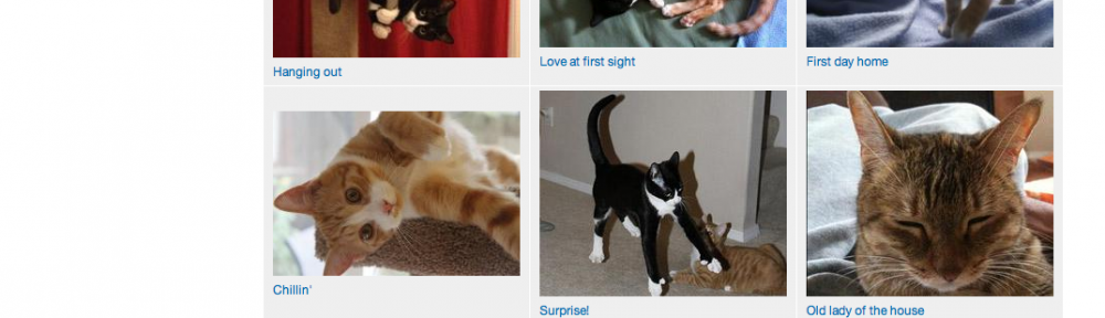 A page of cat photos