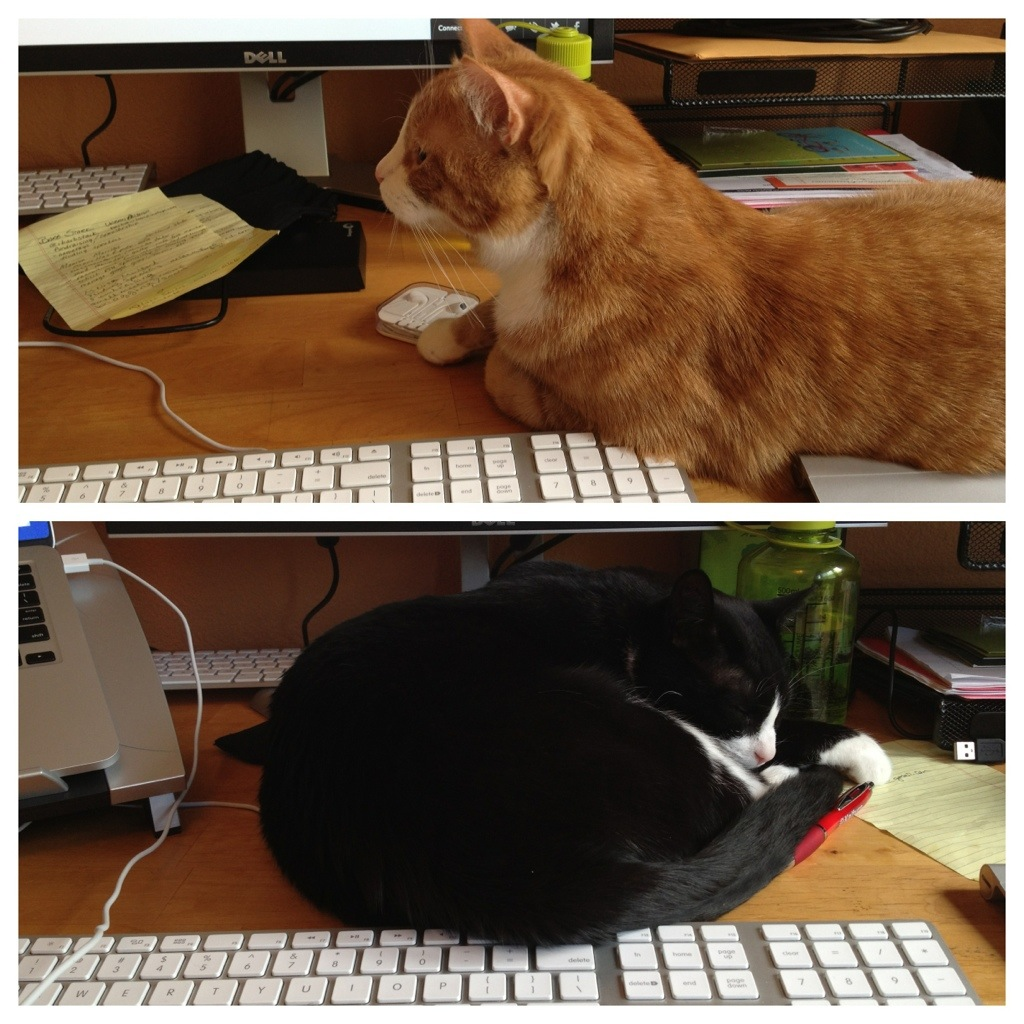 Cats take over my desk