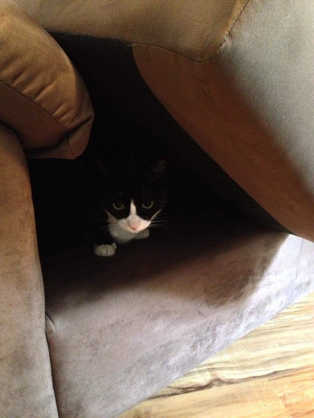 Xander exploring the new couch cave