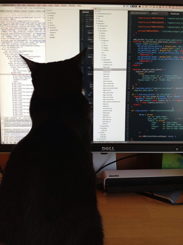 Xander kitty checks out my code.