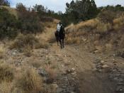 Kronda on a black horse