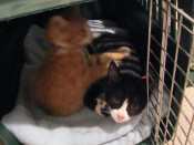Xander and Oz as kittens