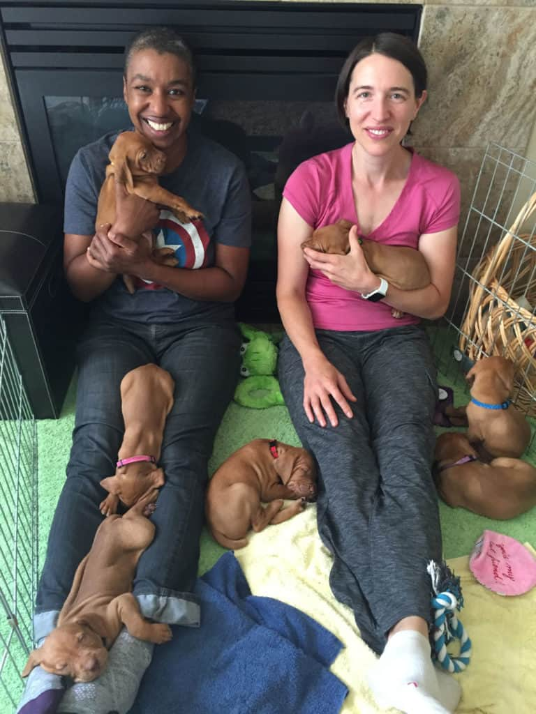 Kronda and Jess with the Written in the Stars litter from Sokoldalu Vizslas
